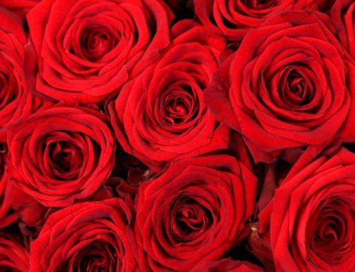 Valentine's Party bei Salsa Libre mit Kartenverlosung